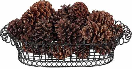 Pine cones for science experiment