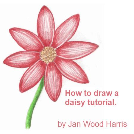How to draw a daisy, step by step