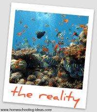 homeschool socialization - tropical fish