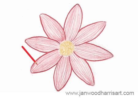 Step 4 - how to draw a daisy
