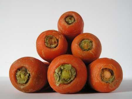 Plant Experiments - Carrots