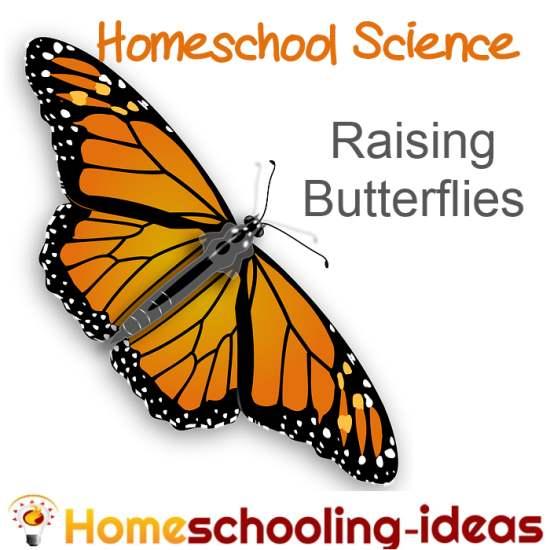 Raising Butterflies for Homeschool Science