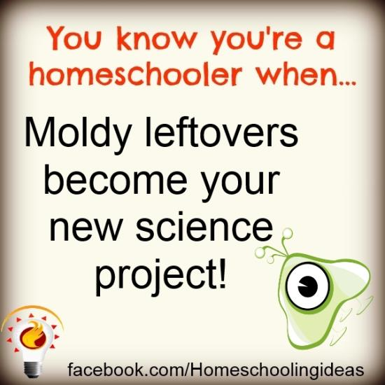You know you're a homeschooler when....